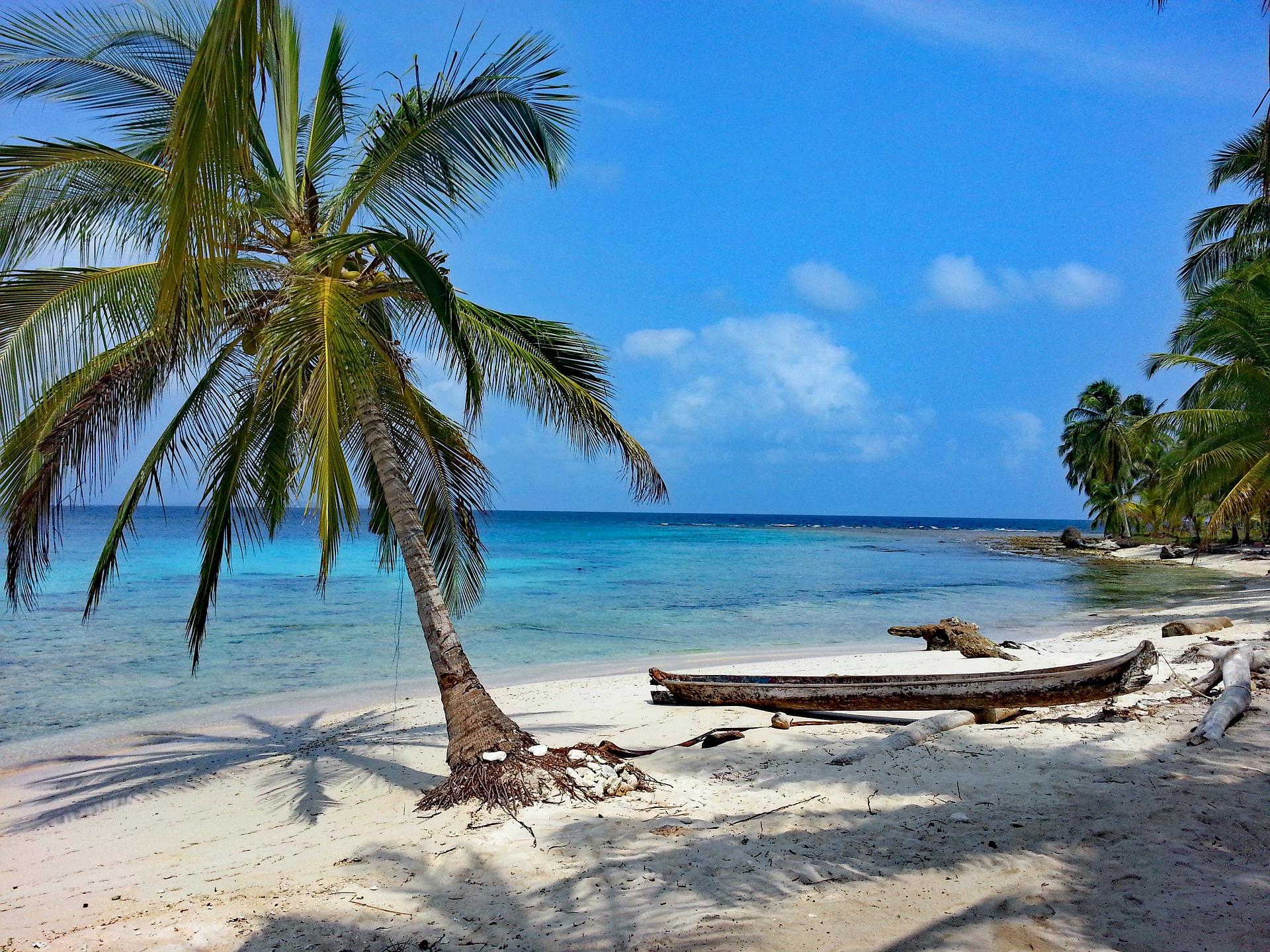 Sommer Palmen Sonnenschein